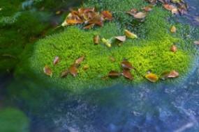 Hojarasca sobre musgo verde en el río