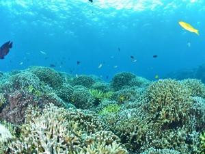 Fondo coralino en Okinawa (Foto: www.okinawa-information.com)