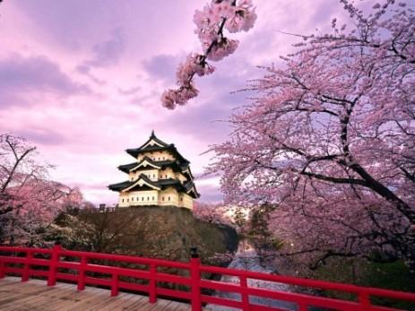 Castillo con Sakura. (www.androidpit.es)