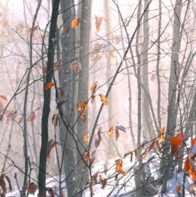 Eliseeva, Elena. Paisaje de invierno al sol