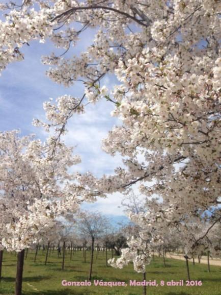 Sakura Gon2