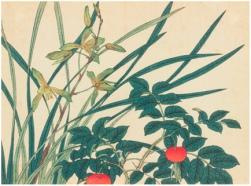 Flores de las cuatro estaciones, Sakai Hôitsu