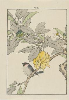 Piñonero y citronela, Imao Keinen