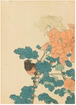 Solanum lyratum y escribano, Imao Keinen